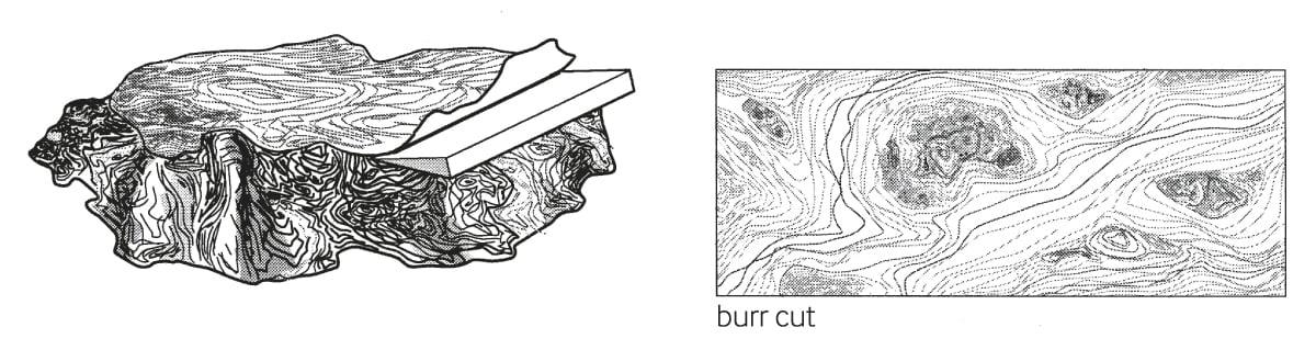 burr cut-01